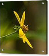 Wodland Flower With Curlicue On Top Acrylic Print