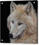 Wolf Bride Acrylic Print