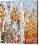 Wolf Call Acrylic Print