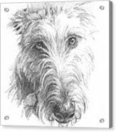 Wolf Hound Pencil Portrait Acrylic Print