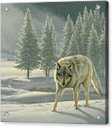 Wolf In Fog    Acrylic Print
