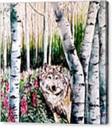 Wolf In Woods Acrylic Print