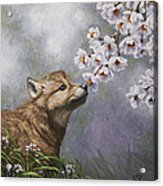 Wolf Pup - Baby Blossoms Acrylic Print by Crista Forest