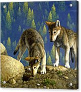 Wolf Pups - Anybody Home Acrylic Print by Crista Forest
