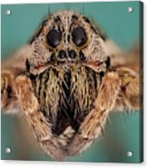 Wolf Spider 5x Acrylic Print