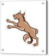 Wolf Wild Dog On Hind Legs Cartoon Acrylic Print