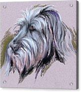 Wolfhound Portrait Acrylic Print