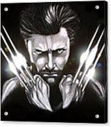 Wolverine Acrylic Print by Kim Lagerhem