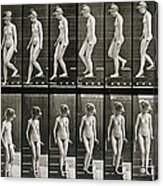 Woman Descending Steps Acrylic Print by Eadweard Muybridge