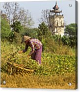 Woman Weeding At Nanmyin Tower Acrylic Print