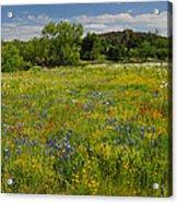 Wonder-filled Meadows Acrylic Print