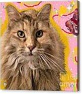 Wonder Kitty Acrylic Print