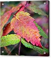Wonder Leaf Acrylic Print