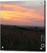Wonderful Poppy Fields Galicia. Acrylic Print