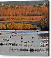 Wonderful Wetlands Acrylic Print by Al Powell Photography USA