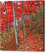 Wonders Of Autumn  Acrylic Print