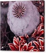 Wonderworld Of Flowers Acrylic Print