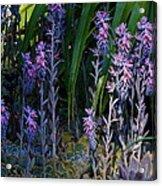 Wondrous Little Forest Acrylic Print