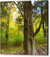Wondrous Tree Acrylic Print
