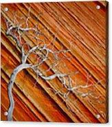 Wood And Stone Acrylic Print