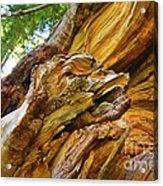 Wood Creature Acrylic Print by John Malone