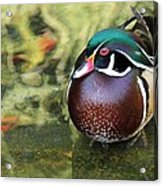Wood Duck Be Still Acrylic Print