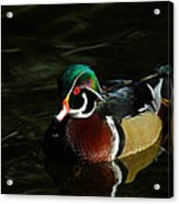 Wood Duck Drip Acrylic Print