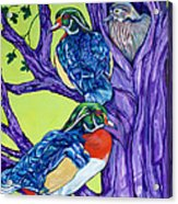 Wood Duck Tree Acrylic Print