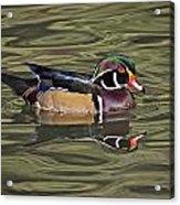 Wood Duck Wade Reflection Beauty Acrylic Print
