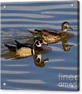 Wood Ducks Acrylic Print