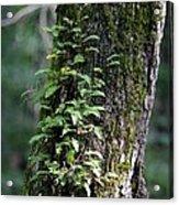 Wood Flora 2013 Acrylic Print