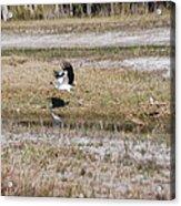 Wood Stork And Herons Acrylic Print