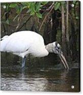 Wood Stork In The Swamp Acrylic Print