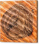 Wood Surface With Annual Rings Acrylic Print