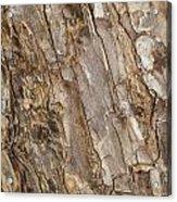 Wood Textures 4 Acrylic Print