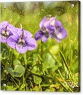 Wood Violet Acrylic Print