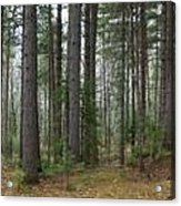 Wooded Panorama In Our Northeast Acrylic Print