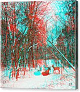 Wooded Path - Use Red And Cyan Filtered 3d Glasses Acrylic Print