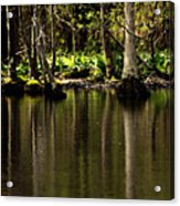Wooded Reflection Acrylic Print