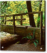 Wooden Bridge In The Hoh Rainforest Acrylic Print