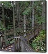 Wooden Forest Trail  Acrylic Print