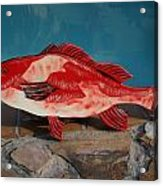 Wooden Red Snapper Acrylic Print