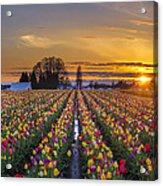 Wooden Shoe Tulip Festival Sunset Acrylic Print