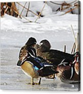 Woodies On Ice Acrylic Print