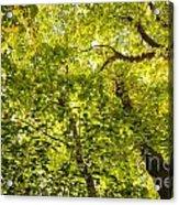 Woodland Background 02 Acrylic Print