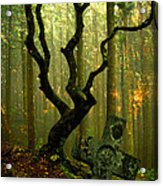 Woodland Burial Acrylic Print