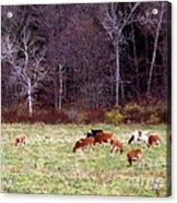 Woodland Dairy Acrylic Print