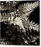 Woodland Fern Acrylic Print