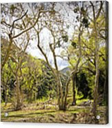Woodland Glen In The California Vallecito Mountains Acrylic Print