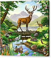 Woodland Harmony Acrylic Print